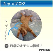 ちゃのブログ 日常のオモシロ情報